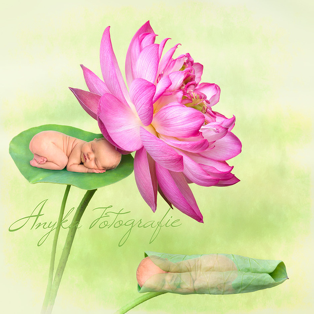 21926 Lotus baby'tjes